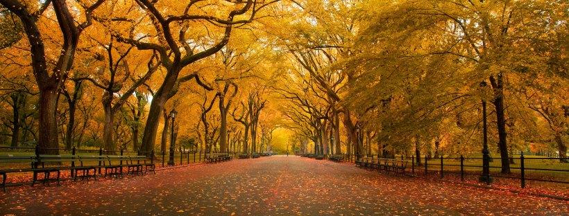Central Park (photo: Chris Ford)